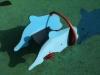 dolphinspringerpaint